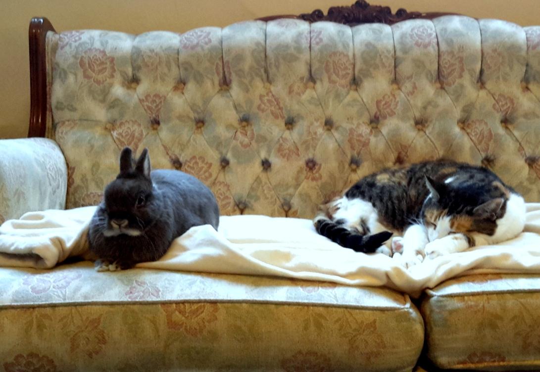 paula-nasmith-robert-and-marlie