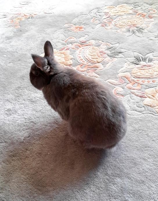 my-little-bunny